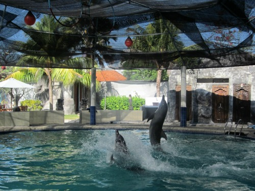 Dolphin show at Melka Hotel
