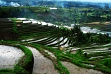Beautiful Rice Terrace in Jatiluwih