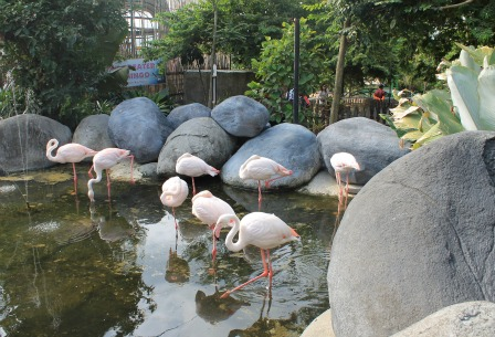 Jatim Park Zoo