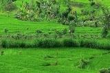 Beautiful landscape of Tirta Gangga