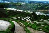 Beautiful Rice Terrace in Jatiluwih